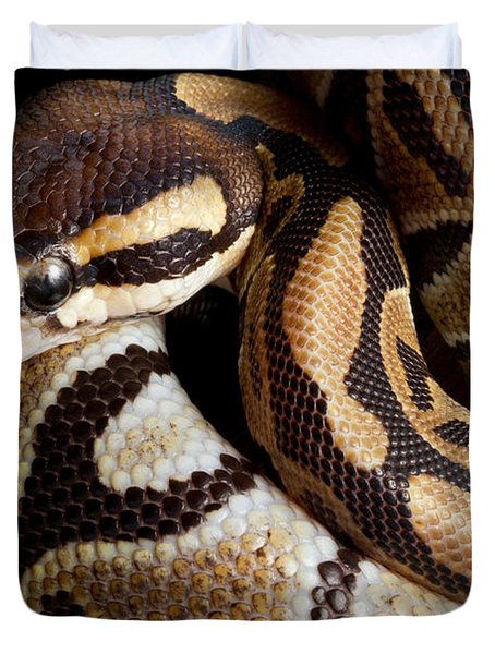 Duvet Cover featuring the photograph Ball Python Python Regius by David Kenny