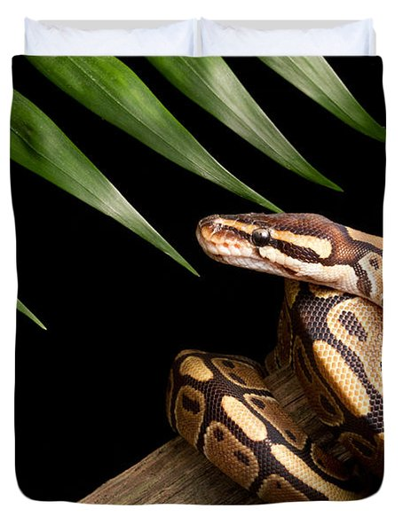 Ball Python Python Regius On Branch Duvet Cover by David Kenny