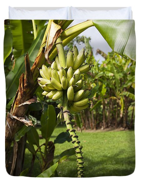 Banana Tree Duvet Cover by Jenna Szerlag