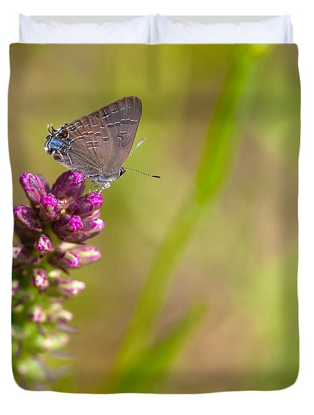 Banded Hairstreak Butterfly Duvet Cover