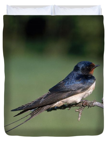 Barn Swallow Duvet Cover by Hans Reinhard