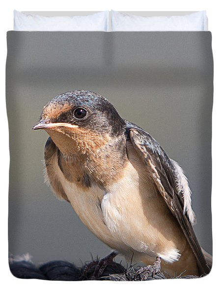 Barn Swallow On Rope I Duvet Cover