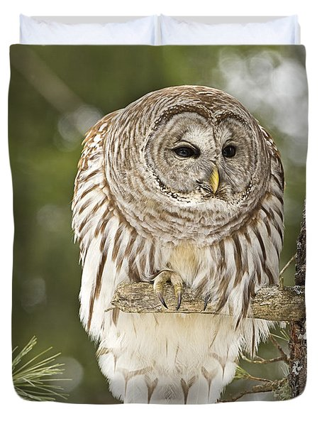 Barred Owl Hunting Duvet Cover