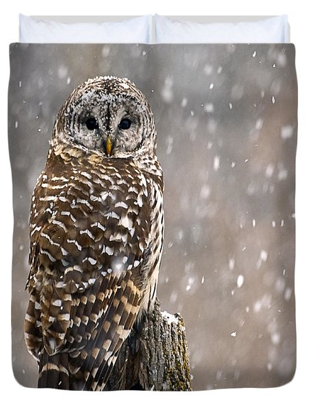 Barred Owl In A New England Snow Storm Duvet Cover
