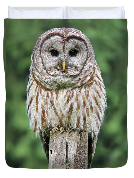 Barred Owl On A Fence Post Duvet Cover