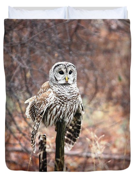 Barred Owl Duvet Cover by Pat Purdy