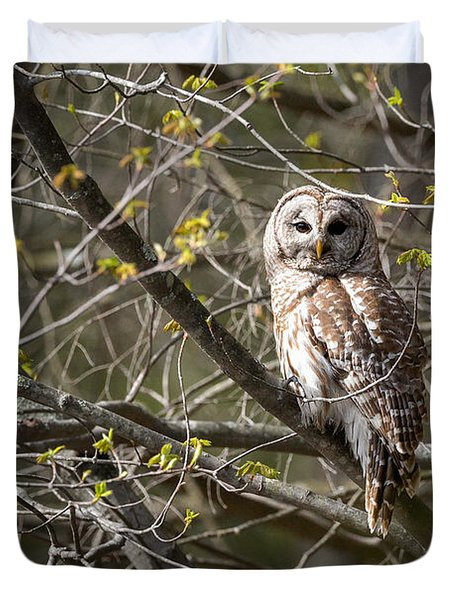 Barred Owl Portrait Duvet Cover by Bill Wakeley