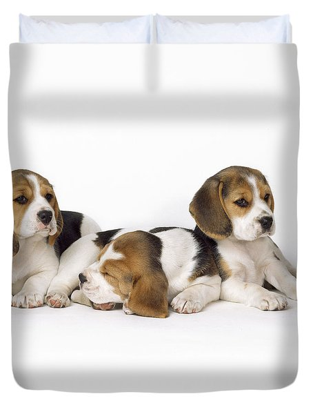 Beagle Puppies, Row Of Three, Second Duvet Cover