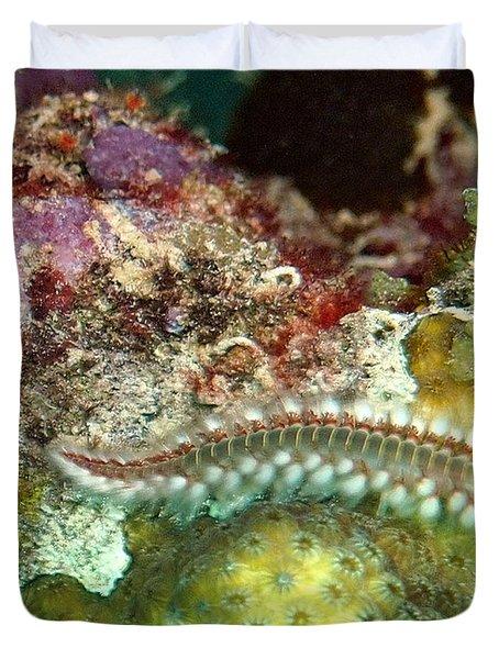 Bearded Fireworm On Rainbow Coral Duvet Cover by Amy McDaniel