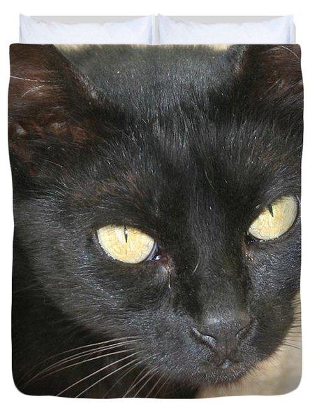 Beautiful Black Cat Portrait  Duvet Cover by Tracey Harrington-Simpson