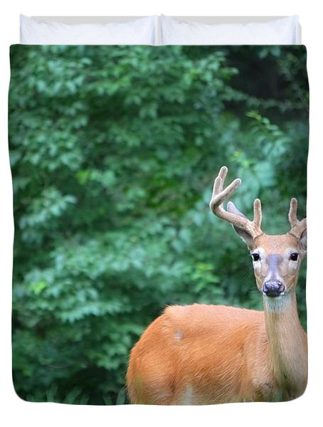 Beautiful Buck  Duvet Cover by Peggy Franz