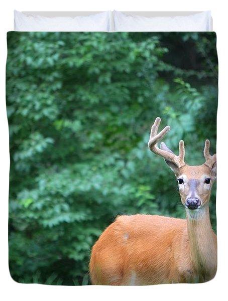 Beautiful Buck  Duvet Cover