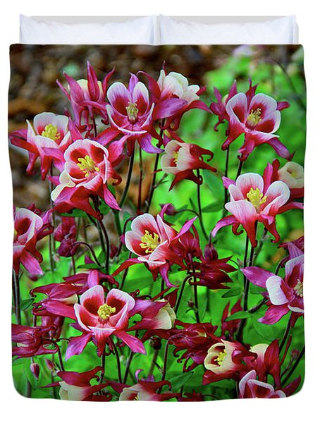 Beautiful Columbine   Duvet Cover by Ed  Riche