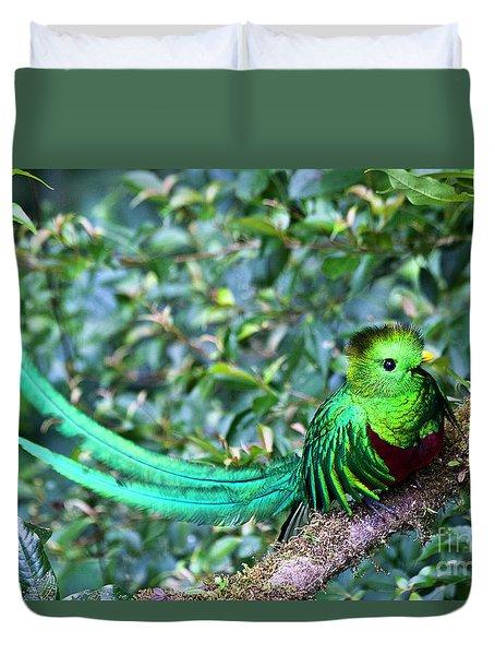 Beautiful Quetzal 3 Duvet Cover by Heiko Koehrer-Wagner