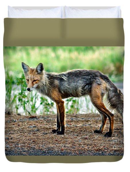 Beautiful Red Fox Duvet Cover by Robert Bales