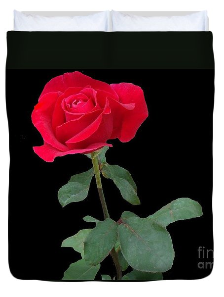 Beautiful Red Rose Duvet Cover by Janette Boyd