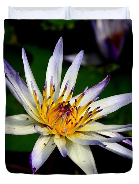 Beautiful Violet White And Yellow Water Lily Flower Duvet Cover