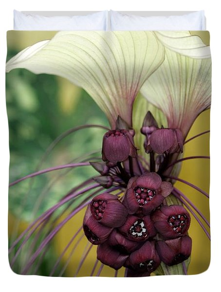 Beautiful White Bat Flower Duvet Cover by Sabrina L Ryan