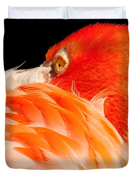Beauty In Feathers Duvet Cover