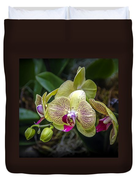 Beauty Of Orchids 3 Duvet Cover