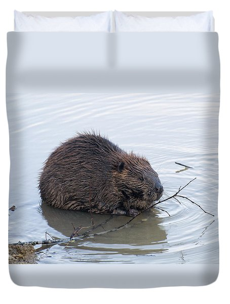 Beaver Chewing On Twig Duvet Cover by Chris Flees
