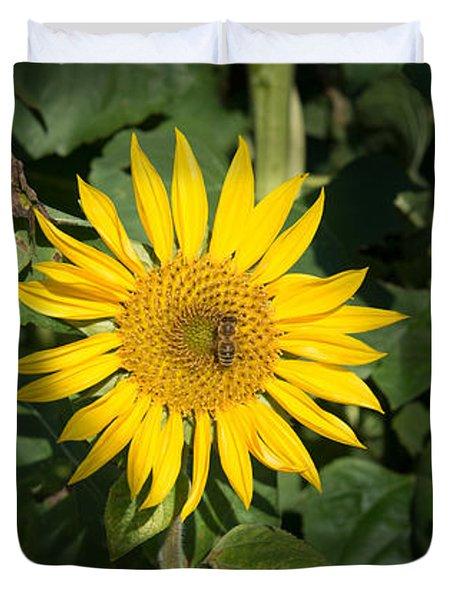 Bee On Sunflower, Baden-wurttemberg Duvet Cover
