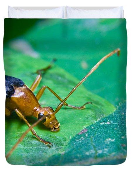 Beetle Sneeking Around Duvet Cover