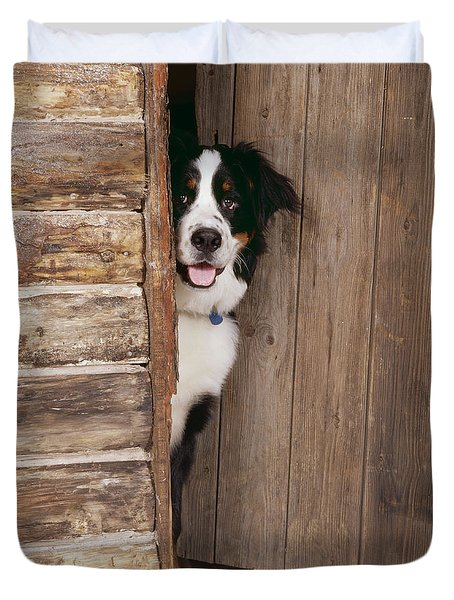 Bernese Mountain Dog At Log Cabin Door Duvet Cover by John Daniels