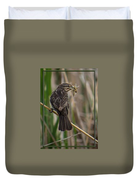 Big Dinner For Female Red Winged Blackbird II Duvet Cover by Patti Deters