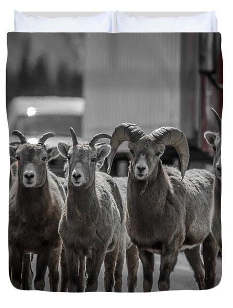 Big Horn Sheep Road Block Duvet Cover