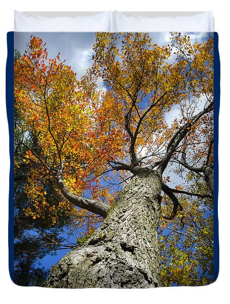 Big Orange Maple Tree Duvet Cover by Christina Rollo