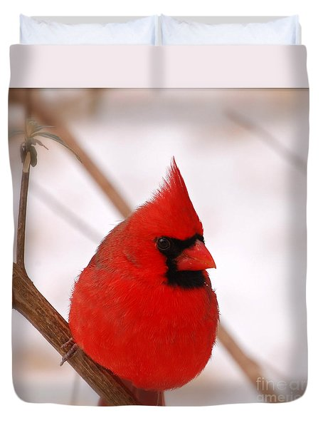 Big Red  Cardinal Bird In Snow Duvet Cover by Peggy Franz