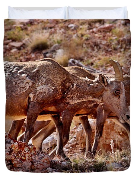 Duvet Cover featuring the photograph Bighorn Canyon Sheep Trio by Janice Rae Pariza