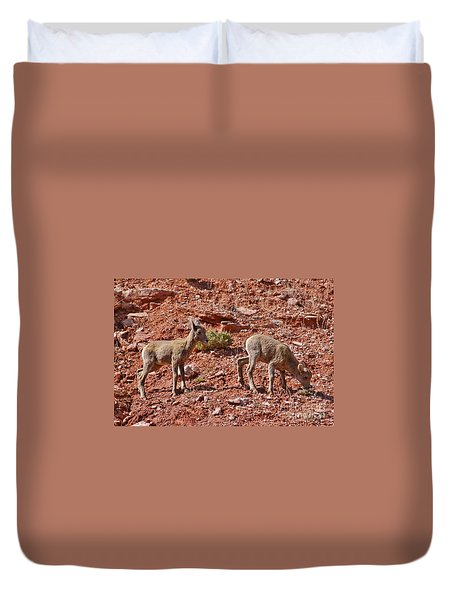 Duvet Cover featuring the photograph Bighorn Canyon Sheep Wyoming by Janice Rae Pariza
