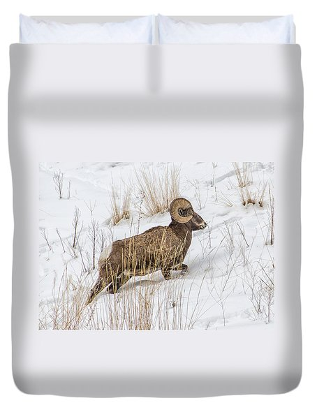 Bighorn In Yellowstone Duvet Cover