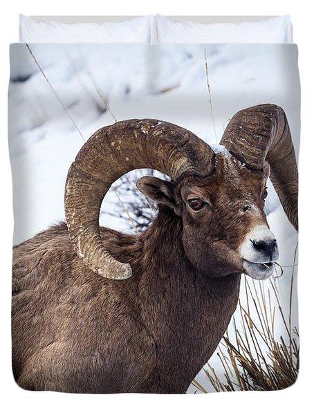Bighorn Ram Duvet Cover
