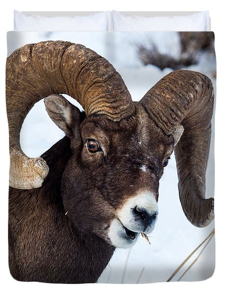 Bighorn Sheep Duvet Cover