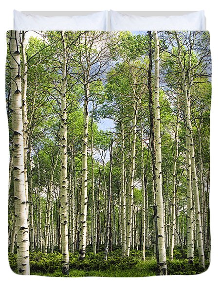 Birch Tree Grove In Summer Duvet Cover by Randall Nyhof