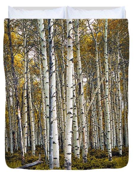 Aspen Trees In Autumn Duvet Cover