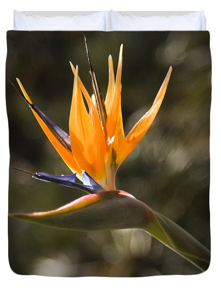 Bird Of Paradise Duvet Cover by David Millenheft