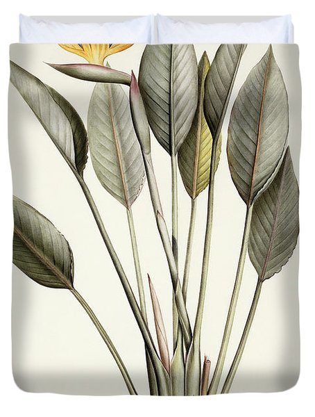Bird Of Paradise Duvet Cover by Pierre Joseph Redoute