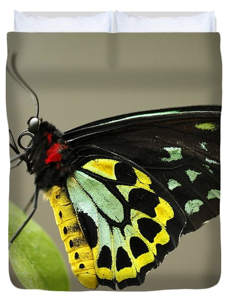 Birdwing Butterfly Duvet Cover