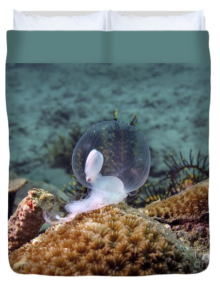 Birth Of Marine Cuttlefish Duvet Cover by Sergey Lukashin