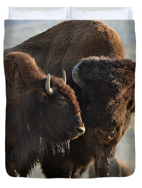 Bison Friends Duvet Cover by Bruce Gourley