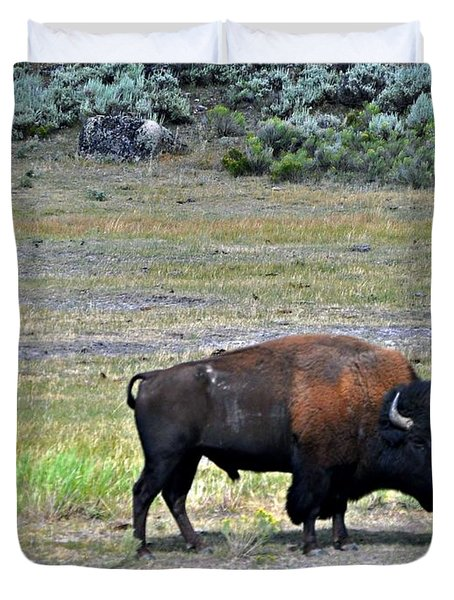 Bison In Lamar Valley Duvet Cover by Marty Koch