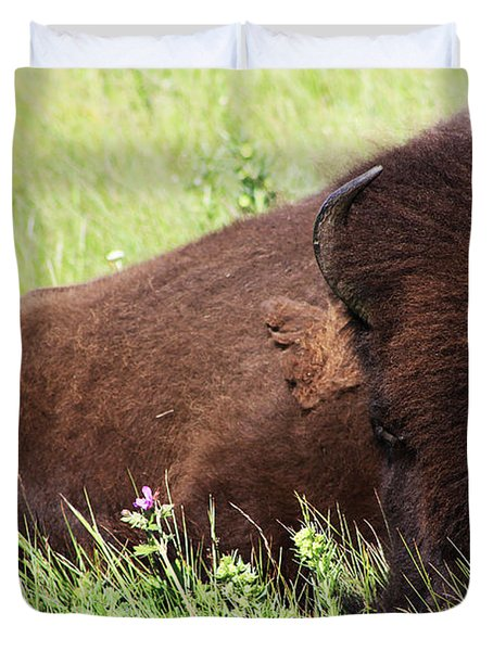 Duvet Cover featuring the photograph Bison Nap by Alyce Taylor