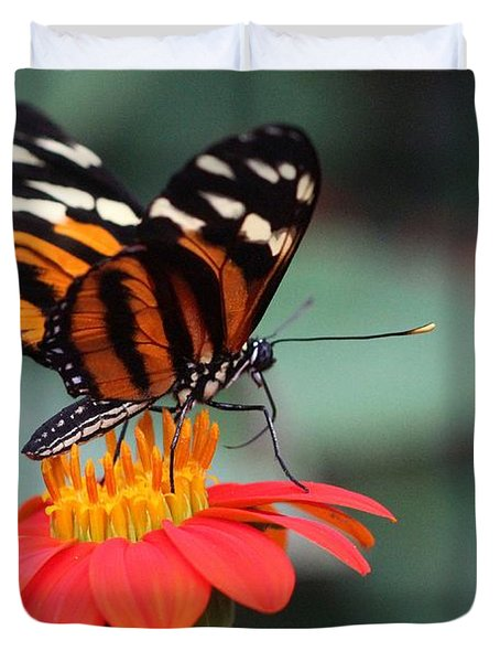 Black And Brown Butterfly On A Red Flower Duvet Cover