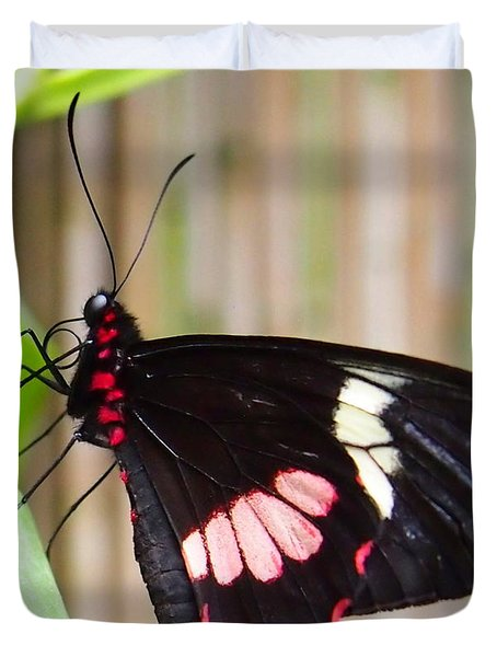 Black And Red Cattleheart Butterfly Duvet Cover by Amy McDaniel