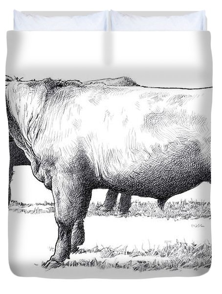 Black Angus Steers On Almshouse Road Duvet Cover by William Beauchamp