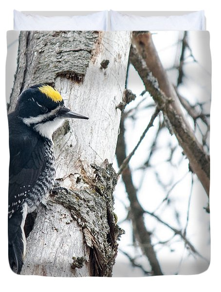 Black-backed Woodpecker Duvet Cover